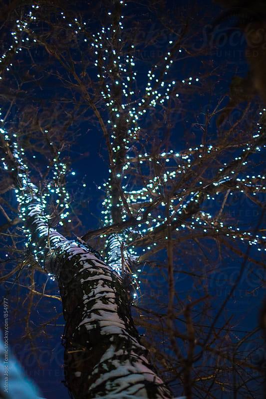 Festive Christmas atmosphere  by Jelena Jojic Tomic for Stocksy United