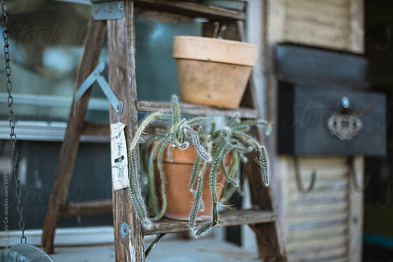 cactus plant in pot sitting on wooden ladder by Image Supply Co for Stocksy United