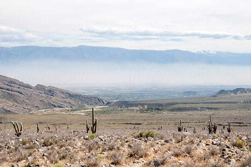Wide landscape shot with cactus in the foreground. by Mike Marlowe for Stocksy United
