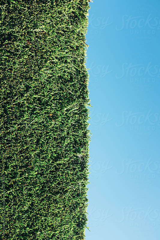 Hedge background by Urs Siedentop & Co for Stocksy United