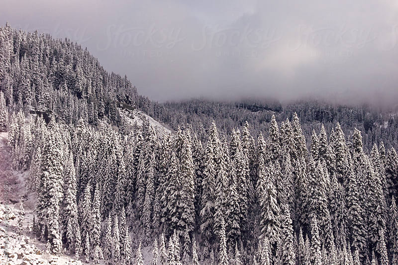 Snowy Forest by Jeff Marsh for Stocksy United