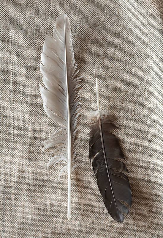 Two feathers sitting on a beige linen cloth by Sherry Heck for Stocksy United