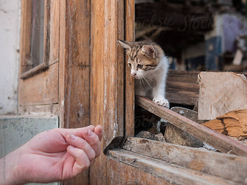Human hand offering help to lonely kitty by Martin Matej for Stocksy United