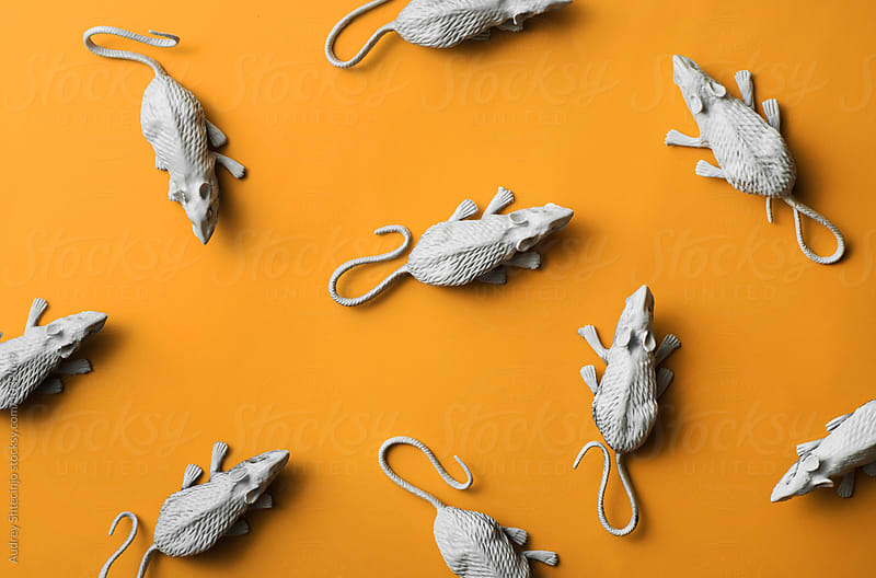 White rats/mouses on orange background.toy/replica by Marko Milanovic for Stocksy United