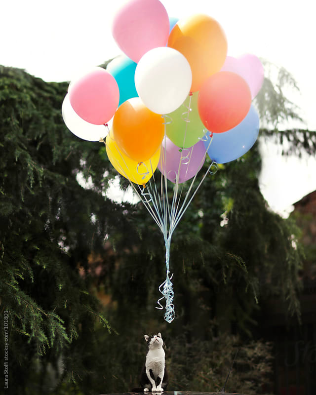 Black and white cat in garden looks at a bunch of colorful balloons floating at mid air by Laura Stolfi for Stocksy United