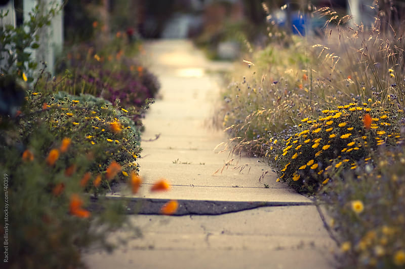 Cracked sidewalk leads a path through spring flowers by Rachel Bellinsky for Stocksy United