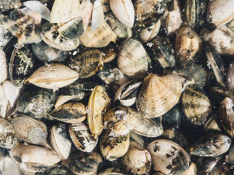 Clams in water by Milena Milani for Stocksy United