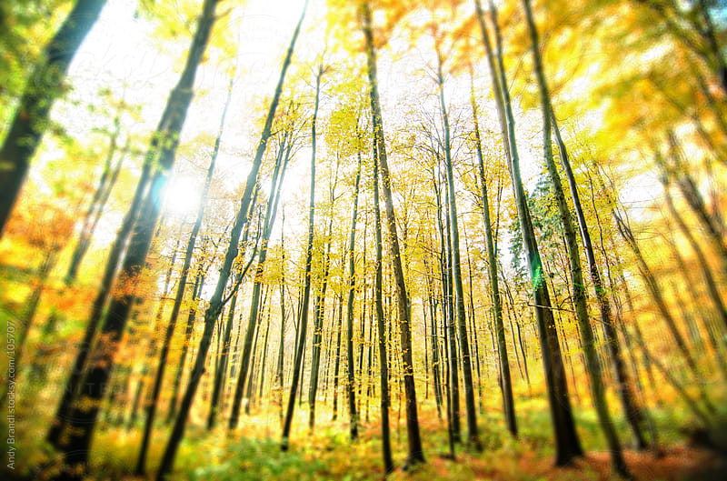 Golden November II (Forest, Baden-Wuerttemberg, Germany) by Andy Brandl for Stocksy United