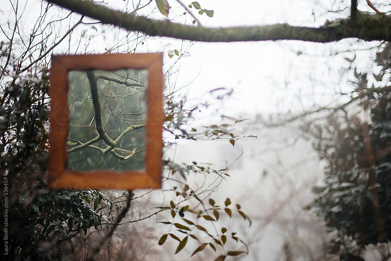 Mirror, mirror...on the tree by Laura Stolfi for Stocksy United