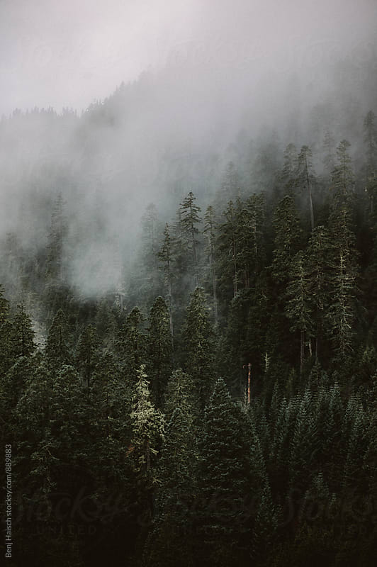 Fog Rises Through the Forest by Benj Haisch for Stocksy United
