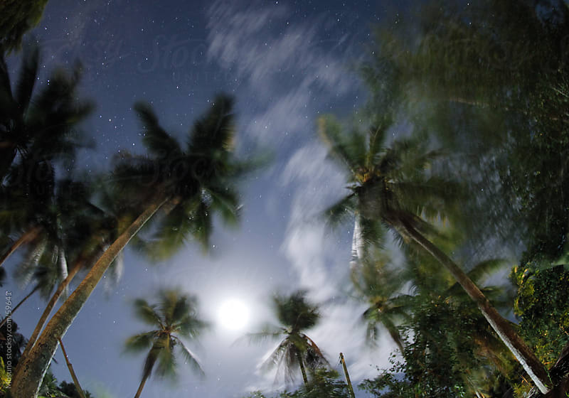 Stars and the Moon above palm trees. by Mosuno for Stocksy United
