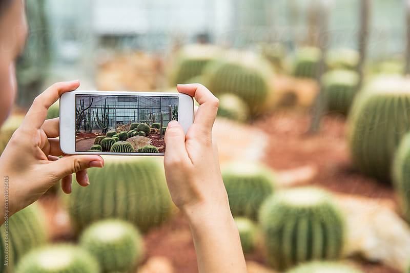 Woman taking a photo of a botanical garden with cactus field  by Jovo Jovanovic for Stocksy United