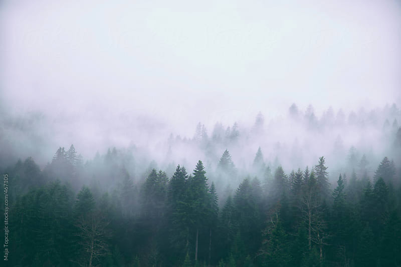 Misty forest of pine trees on the mountains by Maja Topcagic for Stocksy United