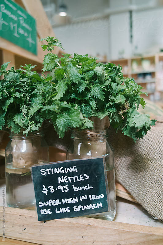 Stinging nettles by Rowena Naylor for Stocksy United