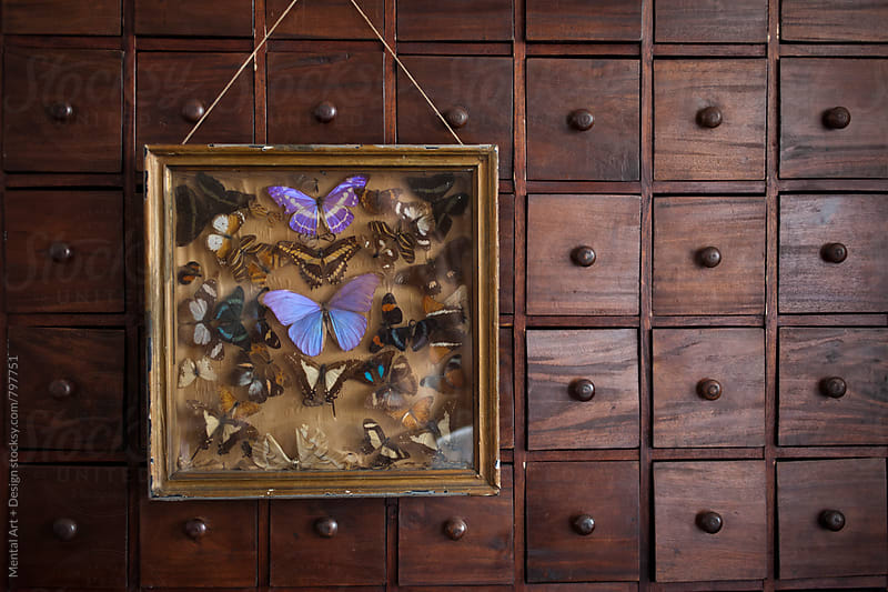 Butterfly Collection by Mental Art + Design for Stocksy United