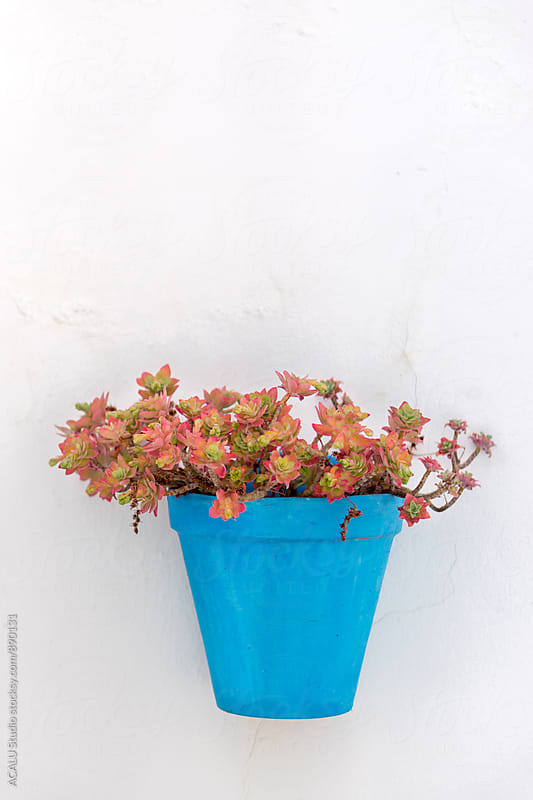 Planter with flowers hanging on the wall by ACALU Studio for Stocksy United