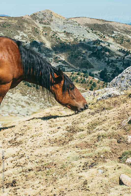 horse eating on the mountain by Javier Pardina for Stocksy United