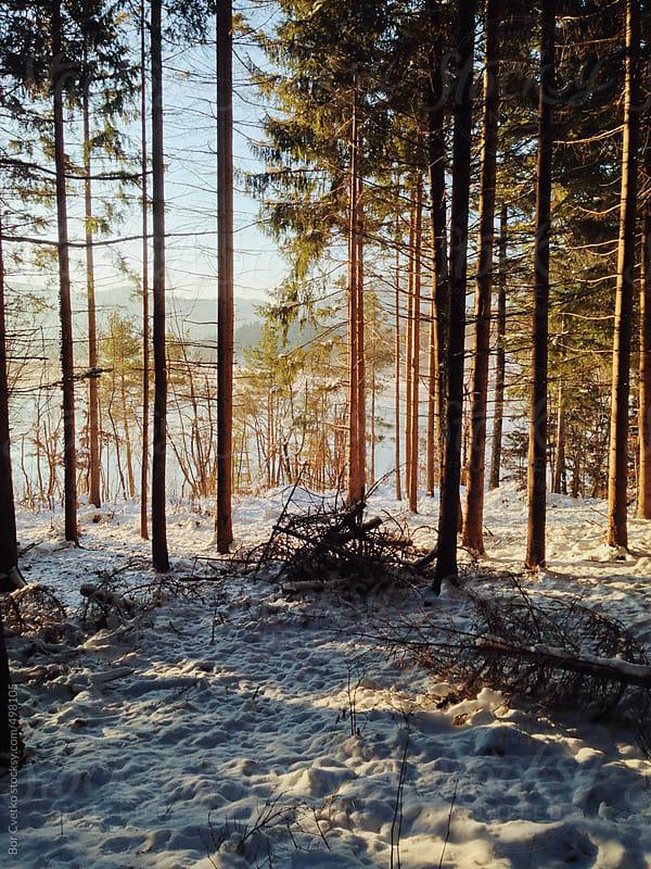 Morning light by Bor Cvetko for Stocksy United