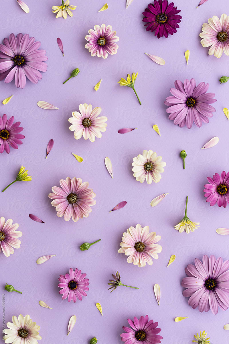Purple Flower Background By Ruth Black Flower Background