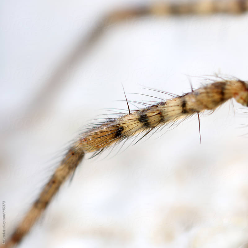 Hairy and spikey spiderleg macro by Marcel for Stocksy United