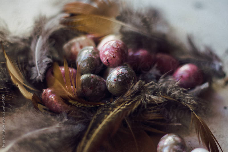 Eggs and feathers by Helen Rushbrook for Stocksy United