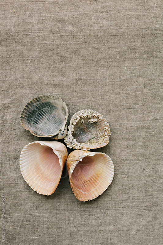 grouping of cockle shells on linen by Kelly Knox for Stocksy United