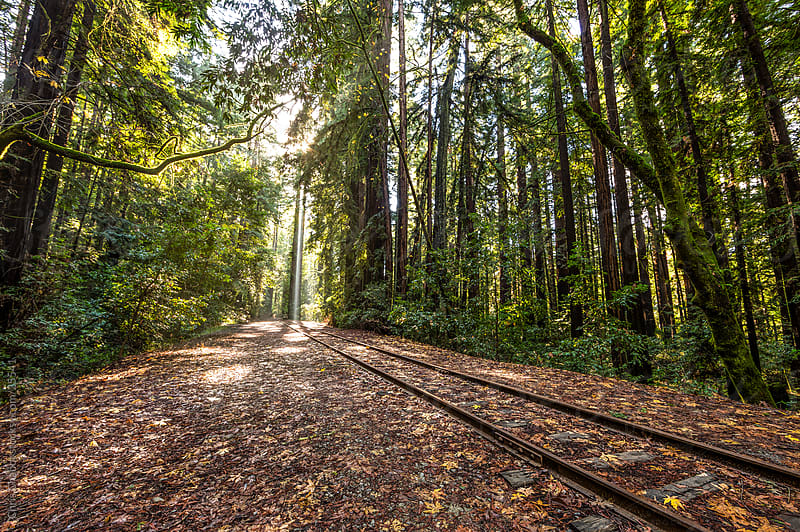 Train tracks running through the forest by Chris Chabot for Stocksy United