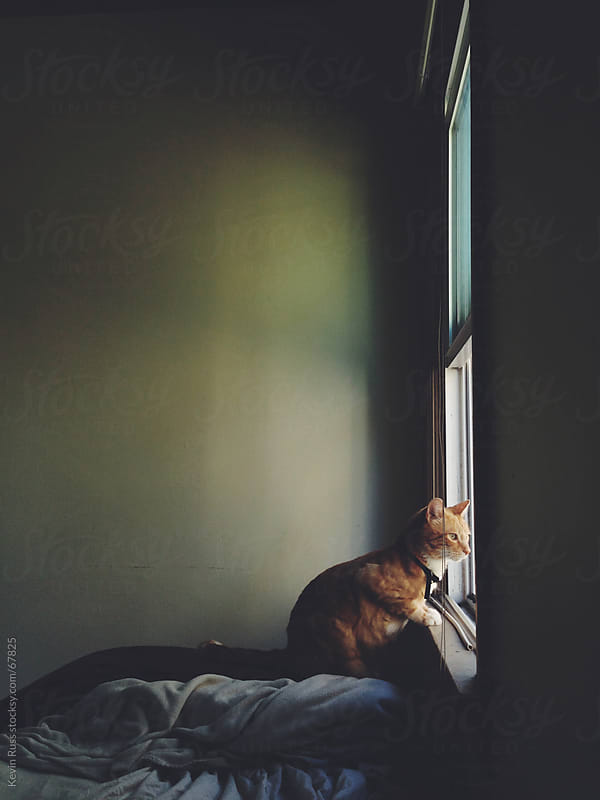 Cat Looking Out Bedroom Window by Kevin Russ for Stocksy United