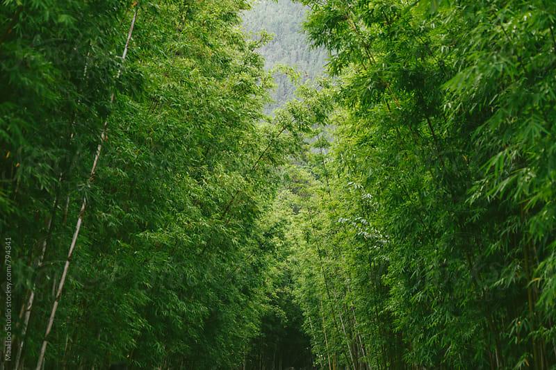 Green bamboos by Maa Hoo for Stocksy United