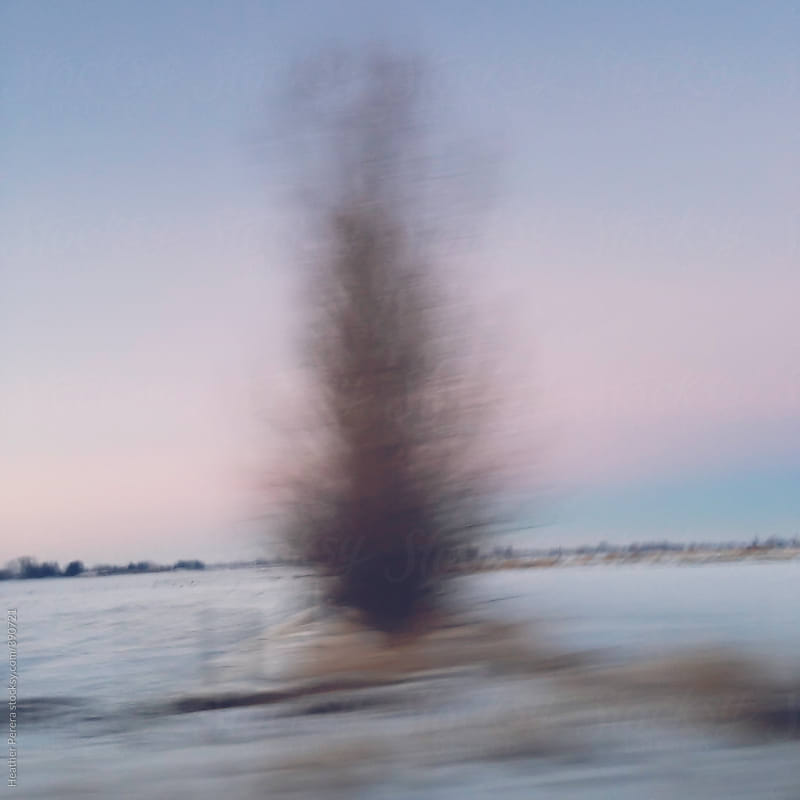 Blurred tree at sunset over the horizon by Heather Perera for Stocksy United