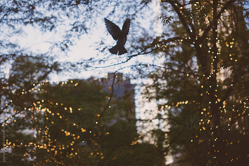 Pigeon flying in a park in New York City by Lauren Naefe for Stocksy United