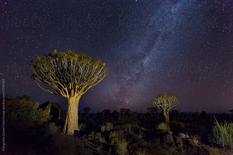 Quiver Trees with milky way at Giants Playground, Keetmanshoop,  by Fotografie Daniel Osterkamp for Stocksy United