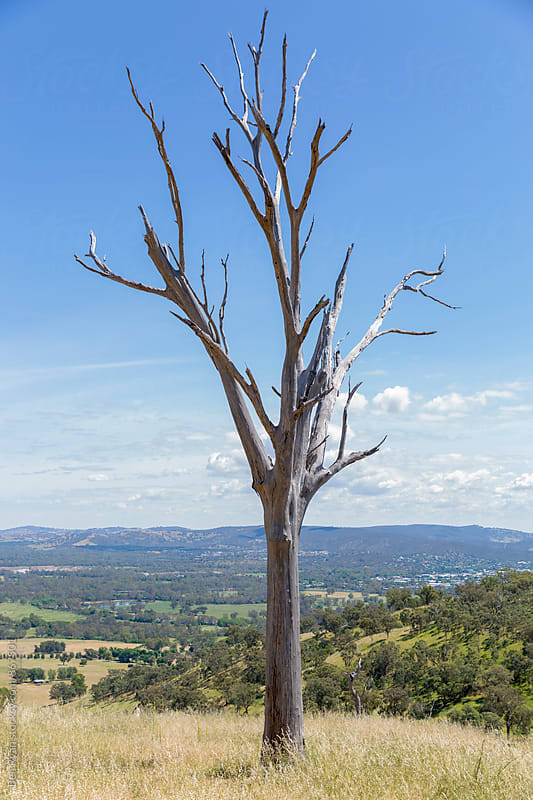 Skeleton of dead tree with wooded hills in background by Ben Ryan for Stocksy United