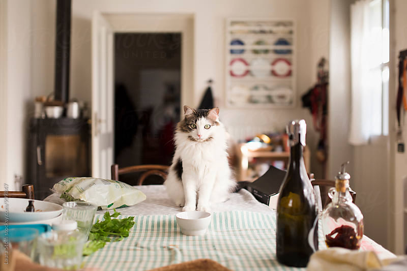 Siberian cat sits in front of her bowl on furnished kitchen table at lunch by Laura Stolfi for Stocksy United
