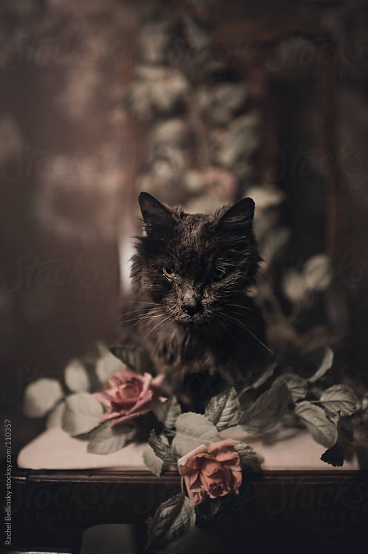 Portrait of an Elderly Grey Cat with Roses by Rachel Bellinsky for Stocksy United