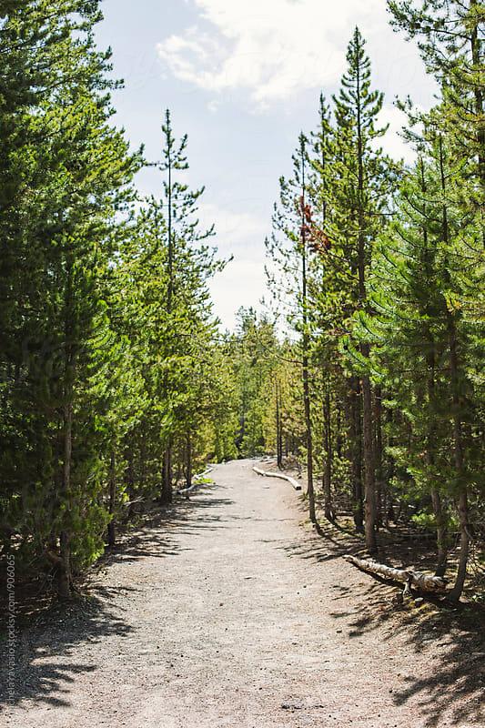 Path among the trees in Yellowstone National Park by michela ravasio for Stocksy United