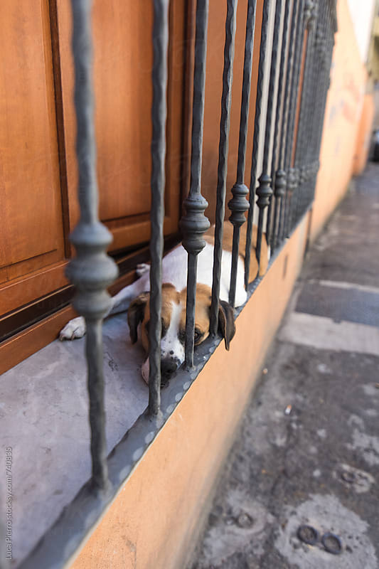 Bored dog on a balcony by Luca Pierro for Stocksy United