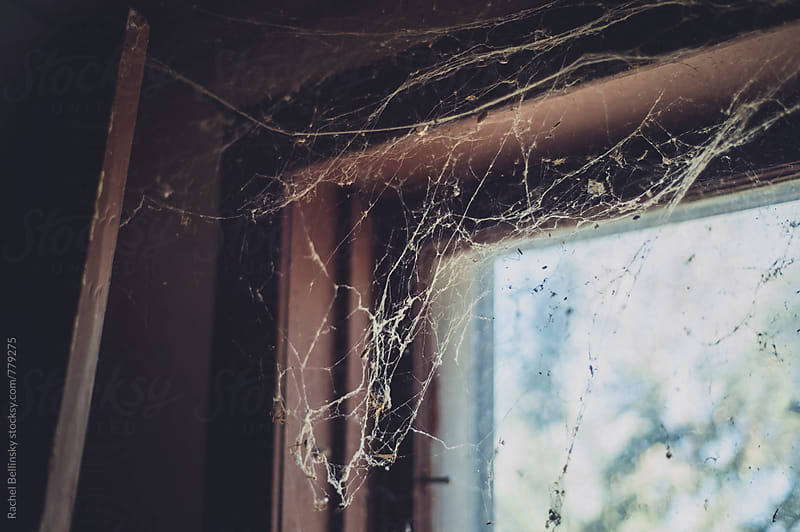 Spider webs in an abandoned house  by Rachel Bellinsky for Stocksy United