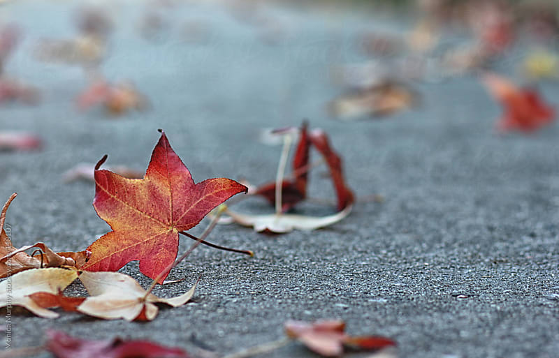 Fallen autumn leaves on the cement by Monica Murphy for Stocksy United
