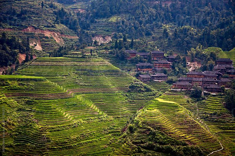 Rice terrace and traditional houses in China by Alice Nerr for Stocksy United