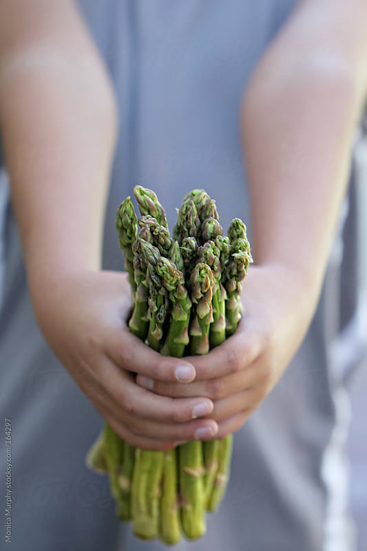 Child holds out bunch of fresh, organic asparagus by Monica Murphy for Stocksy United