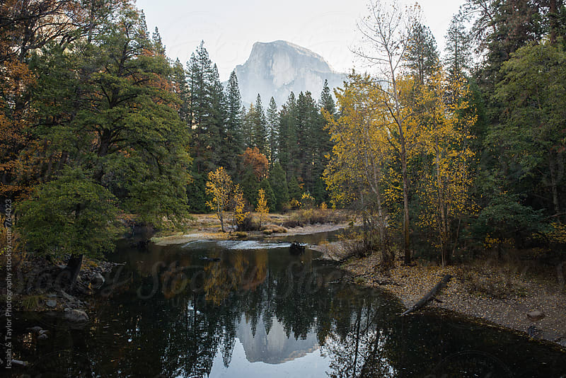Tree and mountain reflection by Isaiah & Taylor Photography for Stocksy United