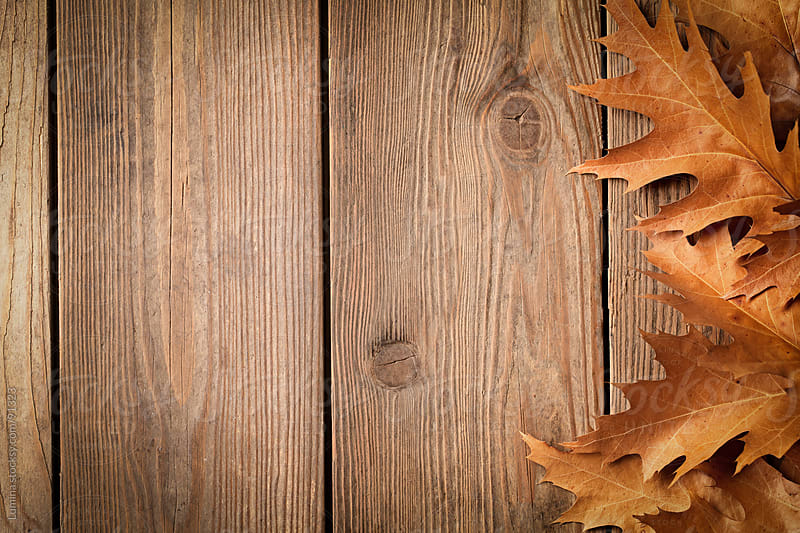 Oak Leaves on a Wooden Board by Lumina for Stocksy United