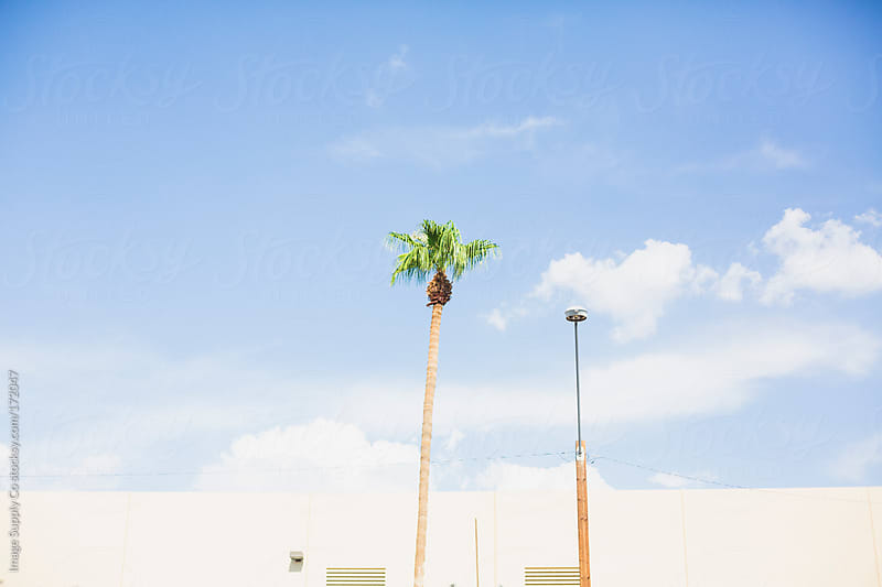 Palm tree and light post with sky and building in background by Image Supply Co for Stocksy United
