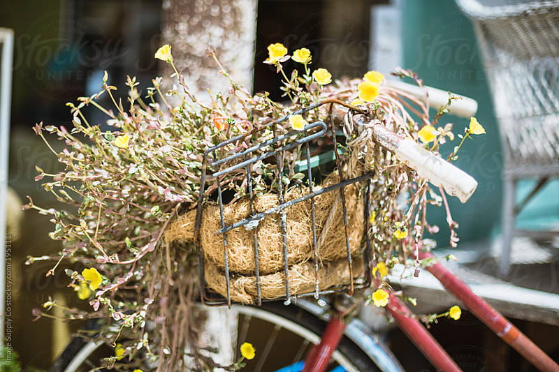 flowers growing out of a bicycle basket by Image Supply Co for Stocksy United