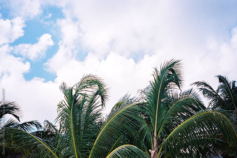 Top of palm trees and sky by Daniel Kim Photography for Stocksy United