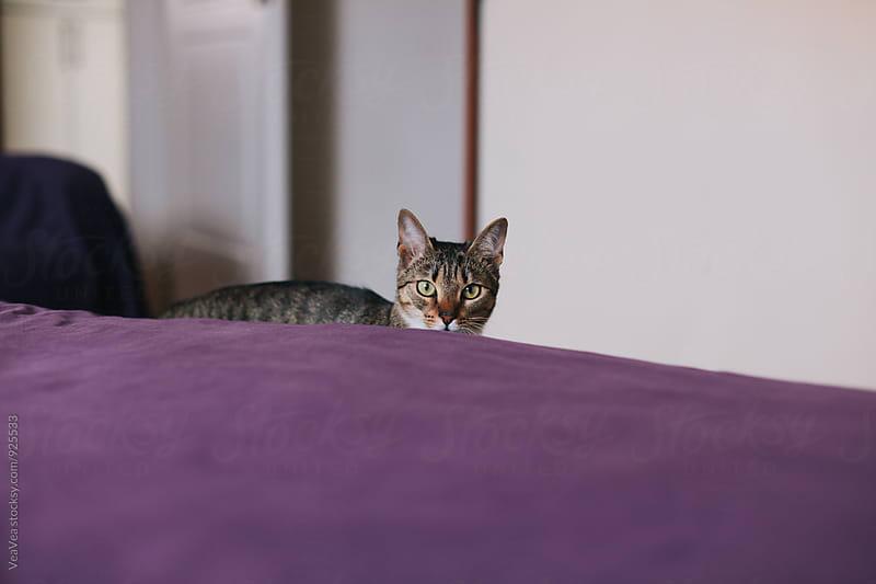 Cat looking at camera by Marija Mandic for Stocksy United