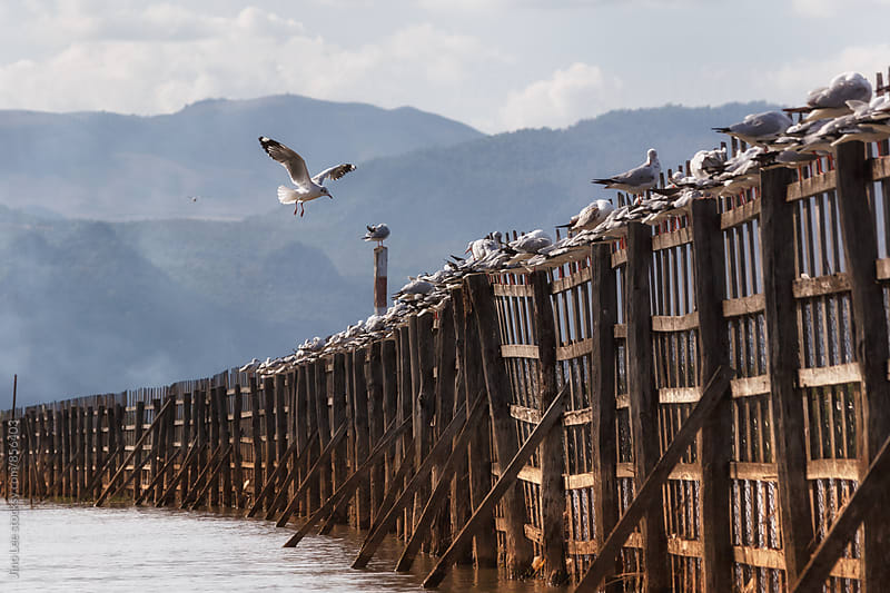 Seagull landing on a fence in Inle Lake, Myanmar by Jino Lee for Stocksy United