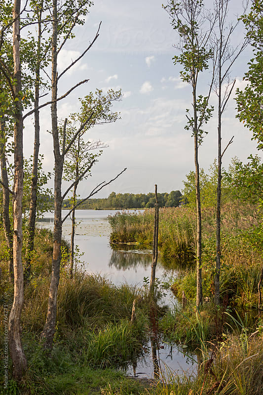 Trees and reeds at the shore of a lake by Melanie Kintz for Stocksy United