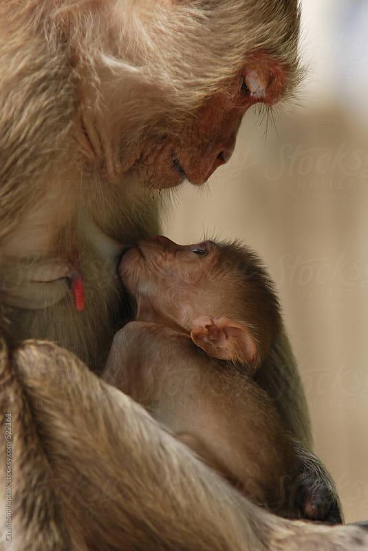 Love Milk by Chalit Saphaphak for Stocksy United